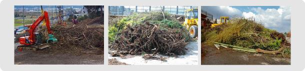 伐採・木材収集