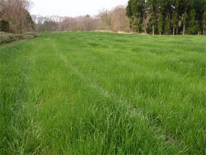 荒廃農地緑化4