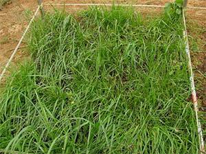 荒廃農地緑化2